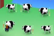 Süt Sağma Yarışı