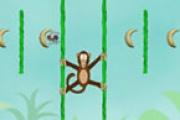 Örümcek Maymun Orman