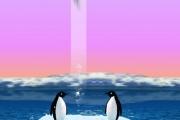 Uçan Penguen