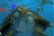 Kaplumbağa Yarışıyor