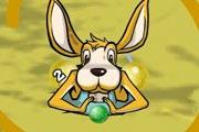 Kanguru Zuma
