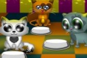 Kedi Besleme