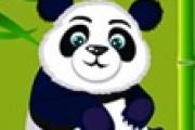 Panda Bakımı
