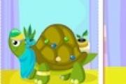 Kaplumbağa Bakımı